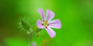 Köroğlu'nun Çiçekleri -11