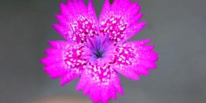 İda'nın Çiçekleri -12