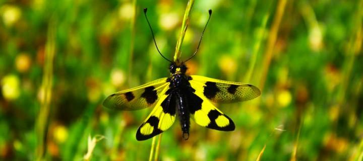 İda'nın Büyülü Canlıları -4