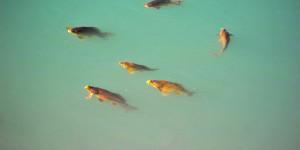 Tortum Gölü'nün Kefalleri