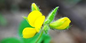 Yenice'nin Yaban Çiçekleri -1