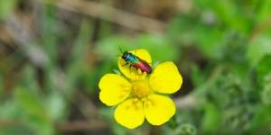 Yenice'nin Yaban Çiçekleri -16