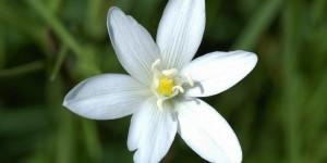Anamas'ın Çiçekleri -13