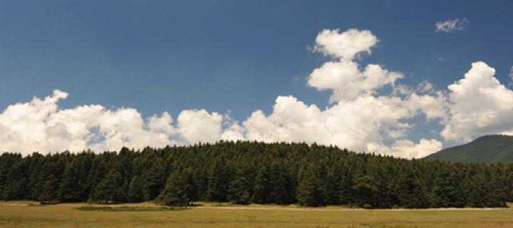 Kuzey Ormanları Savunması Platformu