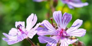Köroğlu'nun Çiçekleri -15