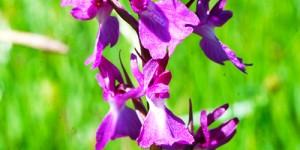 Anamas'ın Çiçekleri -9