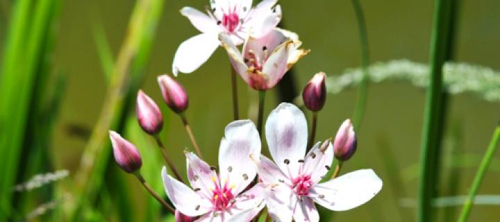 Köroğlu'nun Çiçekleri -23