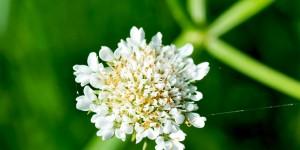 Anamas'ın Çiçekleri -15