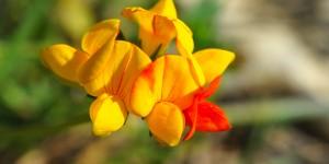 Anamas'ın Çiçekleri -6