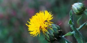 Köroğlu'nun Çiçekleri -18