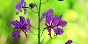 İda'nın Çiçekleri -19