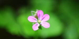 İda'nın Çiçekleri -17