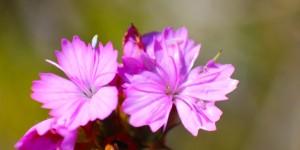 İda'nın Çiçekleri -18