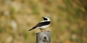 Anamas'ta Kuş Olmak