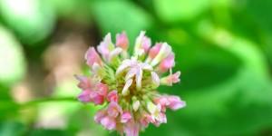 Yenice'nin Yaban Çiçekleri -31