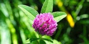 Anamas'ın Çiçekleri -16