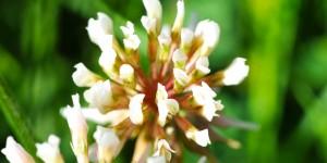 Anamas'ın Çiçekleri -31