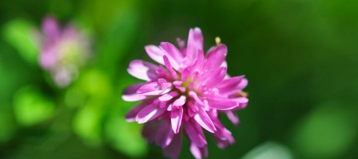 Anamas'ın Çiçekleri -32