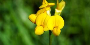 Anamas'ın Çiçekleri -33