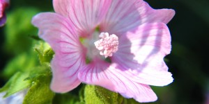 Köroğlu'nun Çiçekleri -35
