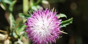Köroğlu'nun Çiçekleri -36