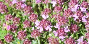 Anamas'ın Çiçekleri -20