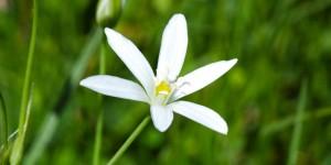 Anamas'ın Çiçekleri -22