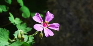 Anamas'ın Çiçekleri -27