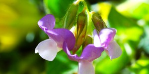 Anamas'ın Çiçekleri -29