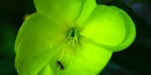 İda'nın Çiçekleri -20