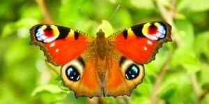 İda'nın Büyülü Canlıları -16