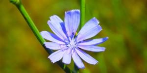 İda'nın Çiçekleri -22