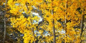 21 Ağustos / Yaprakların Sararmaya Başlaması