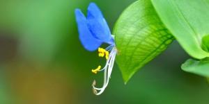 Doğu Karadeniz'in Çiçekleri -1