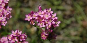 Köroğlu'nun Çiçekleri -44