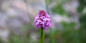 Doğu Karadeniz'in Çiçekleri -6