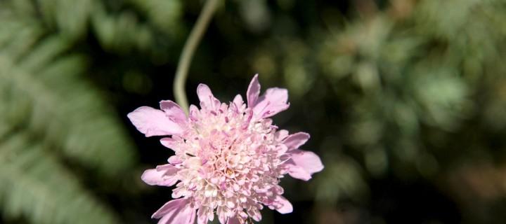 Köroğlu'nun Çiçekleri -38