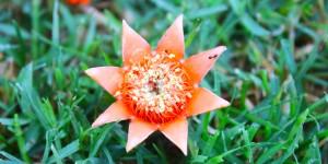 İda'nın Çiçekleri -27