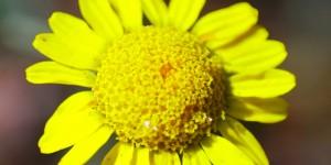 İda'nın Çiçekleri -28