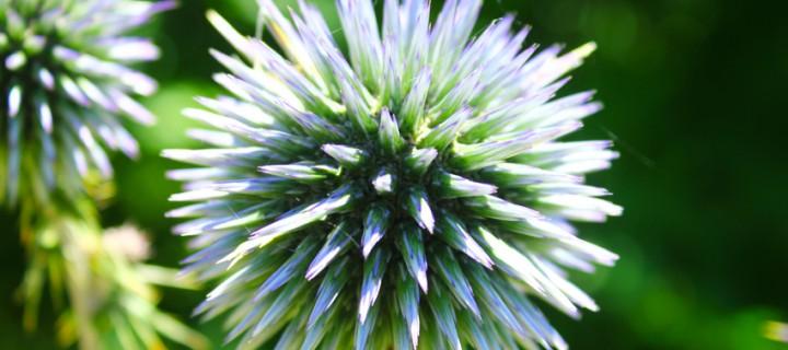 İda'nın Çiçekleri -29