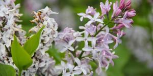 Doğu Karadeniz'in Çiçekleri -4