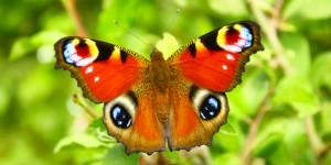 İda'nın Büyülü Canlıları -26