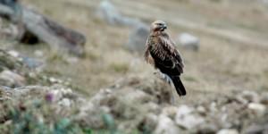 6. Uzundere Kuş Gözlem Festivali