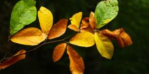 23 Eylül / Koç Katımı Zamanı, Sonbaharın Başlangıcı