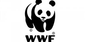 WWF, Greenpeace Üyelerinin Derhal Serbest Bırakılması İçin Çağrıda Bulunuyor