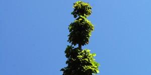 31 Ekim / Ağaç Budama Zamanı