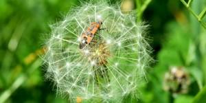 BÖFYAP Böcek Fotoğrafları ve Resimleri Sergisi