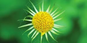 Köroğlu'nun Çiçekleri Fotoğraf Sergisi