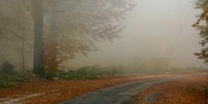 16 Ekim / Yağmur Mevsiminin Başlaması, Dünya Gıda ve Tarım Günü