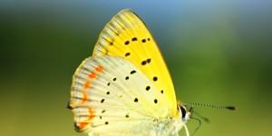 İda'nın Büyülü Canlıları -28